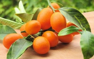 Glorious Kumquats